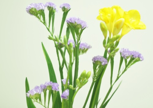 【ソレダメ】簡単に花を生けるコツ!よい花屋さんとは?