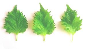 【ジョブチューン】病気予防の食べ物!免疫力アップに青じそ&シミ・シワの改善にシナモン豆乳