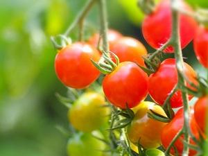 【あさチャン】トマトの甘酒ピクルスのレシピ!甘酒のアレンジレシピ