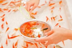 【それって実際どうなの課】金魚すくいのコツ!こちくや金魚すくい道場が伝授