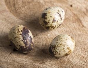 【ヒルナンデス】うずらの卵で恐竜の卵のレシピ!お弁当!ユッキーナ&大島