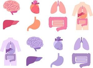 【あさイチ】隠れ脂肪肝対策に大豆たんぱく質やコーヒー!リスクセルフチェック法も