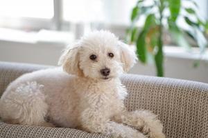 ザワつく!金曜日:扇風機の向きを変える賢い犬の動画!