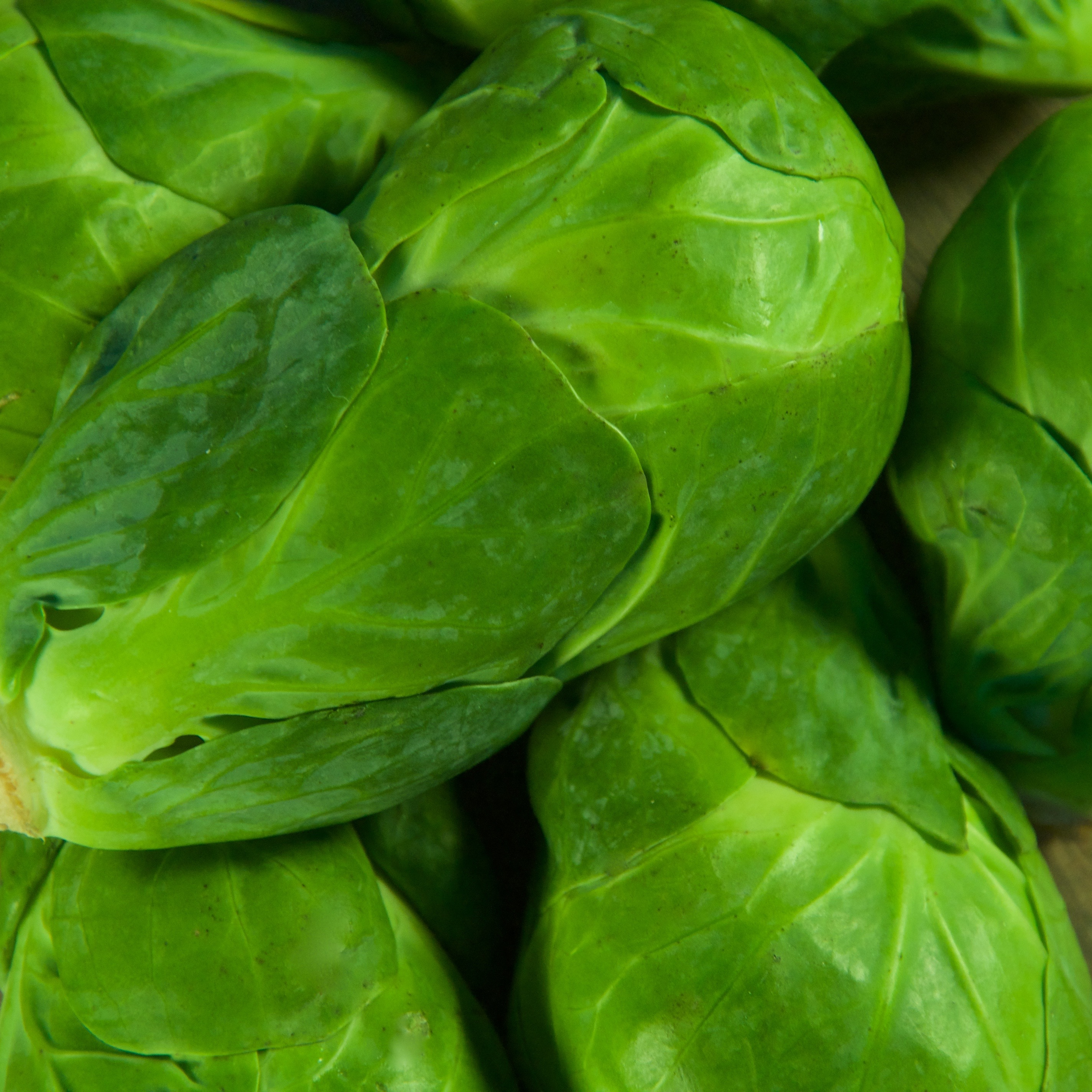 Baby Led Weaning & Meeting Iron Requirements Brussel Sprouts