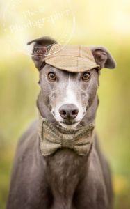 Sherlock Holmes Hound