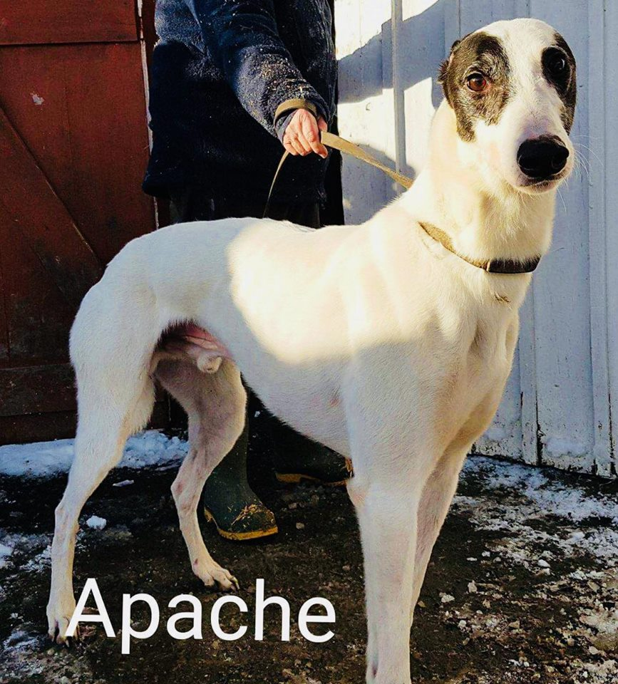 Apache (NB: Out at trial home)