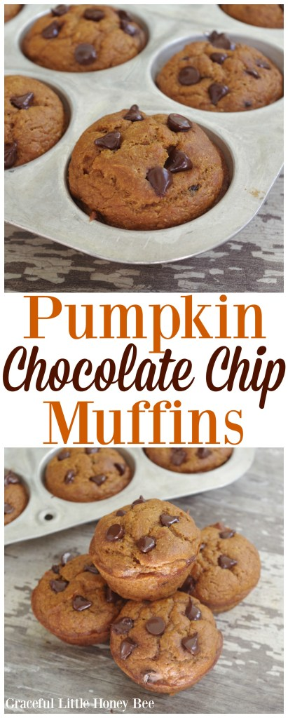 Try these easy and delicious Pumpkin Chocolate Chip Muffins for a fun fall treat on gracefullittlehoneybee.com