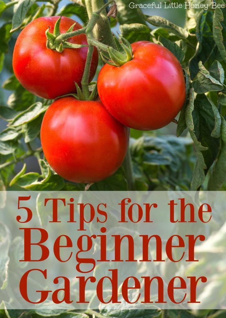 See these 5 easy tips for beginner gardeners on gracefullittlehoneybee.com