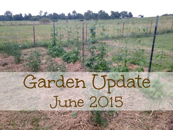 Garden Update June 2015