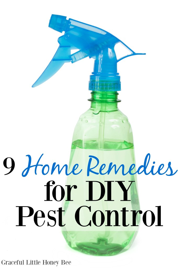 Learn some easy home remedies for taking care of common pests without having to call a professional!
