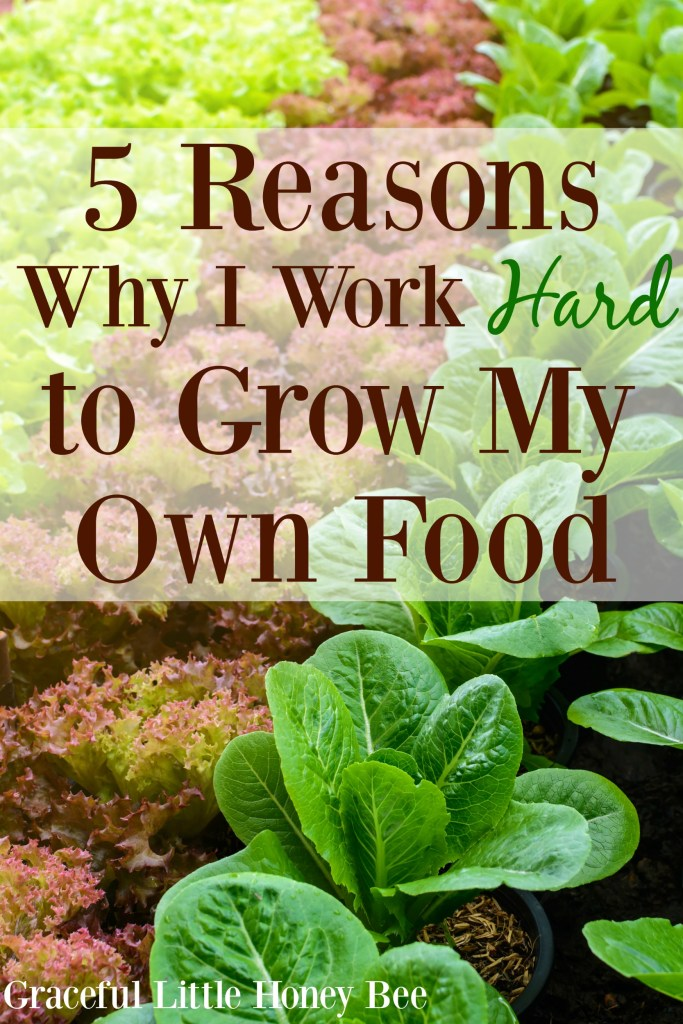 See the reasons  why I work so hard to grow my own food on gracefullittlehoneybee.com