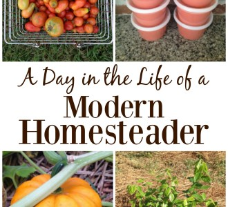 See what this modern homesteader does all day including gardening, planting trees and making tomato sauce on gracefullittlehoneybee.com
