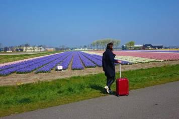 Tulips in Holland 2017 Gracie Opulanza Europe 1 Kangol Samsonite (3)