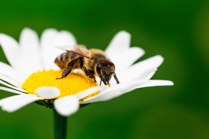 How to Attract Helpful Animals to Your Garden