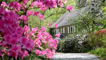azaleas and stone manor house at McCrillis Gardens in Bethesda, Maryland
