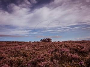 A no landscape photography trip out