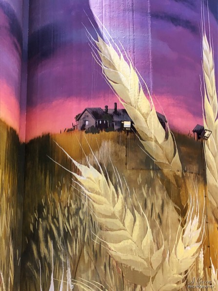 Cam Scale – South Australia Silo Art Trail –Kimba are the eleventh silo in the Australian Silo Art Trail and were completed in 2017. Photo Credit Annette Green