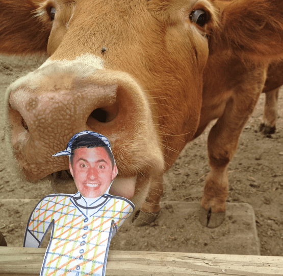 Flat Ryan with a cow