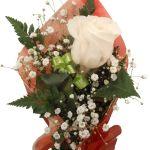 rosa blanca para enviar