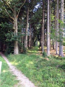 Waldkurs0