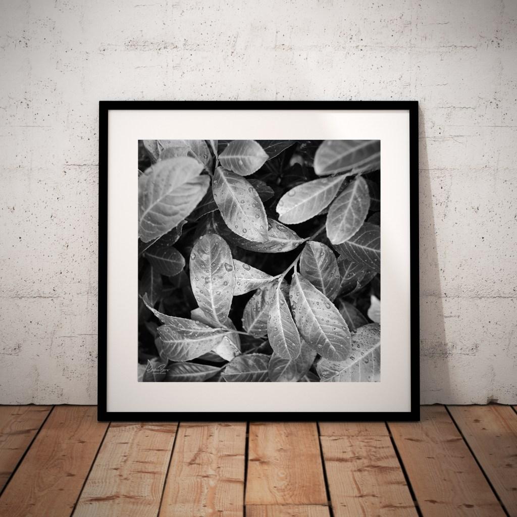 Laurel Leaves framed