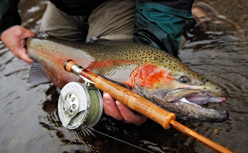 Upstate New York Fall Hd Wallpaper My Favorite Rainbow Trout Caught And Released In New York
