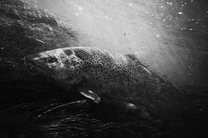 Adirondack Fall Wallpaper Fly Fishing Stock Photography Images