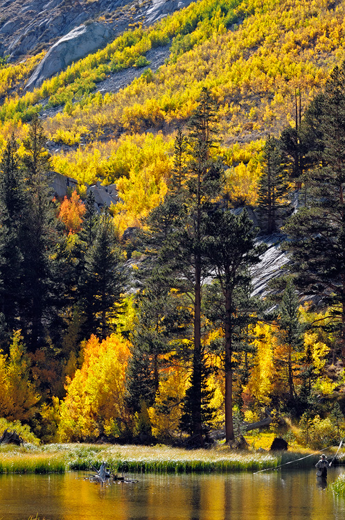 Fall Day Wallpaper California Eastern Sierra Fall Foliage Color Photography