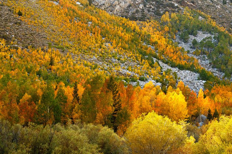 Fall Aspens Wallpaper California Eastern Sierra Fall Foliage Color Photography
