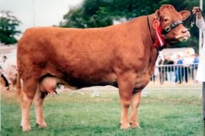 Arabella - Royal Highland Show 1992 - Overall Champion