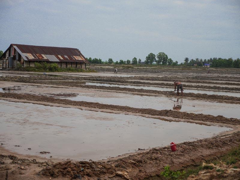 Marais salants Kampot