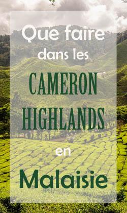 Que faire aux Cameron Highlands