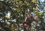 Bukit Lawang – Trek à la recherche des orangs-outans de Sumatra
