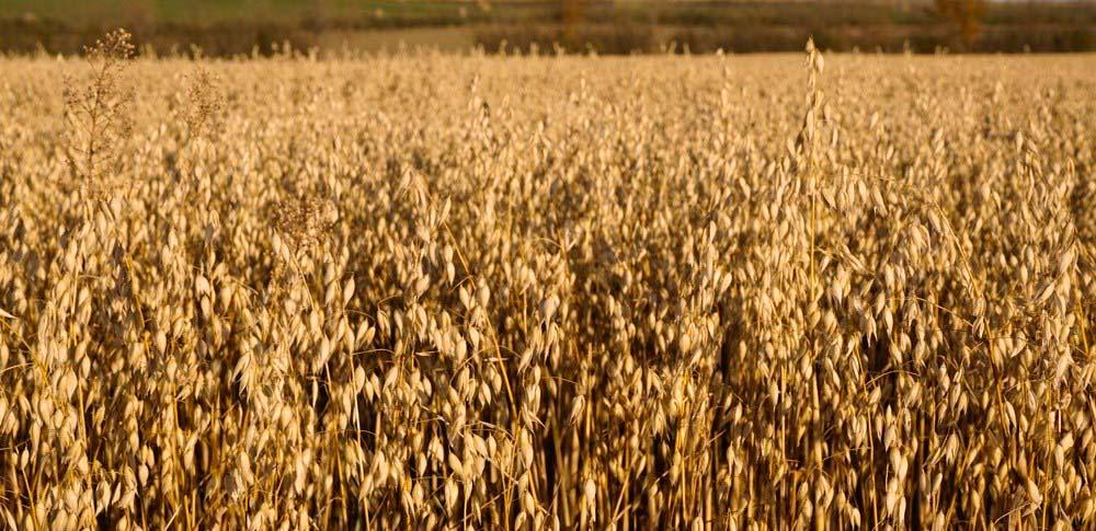 Contact Us   Grain Millers