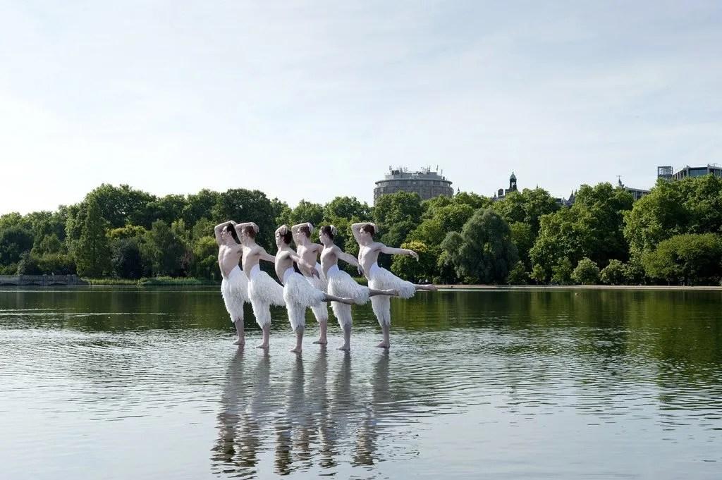 Sky 3D Swan Lake 1