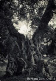 barbara-luisi-vita-aeterna-2