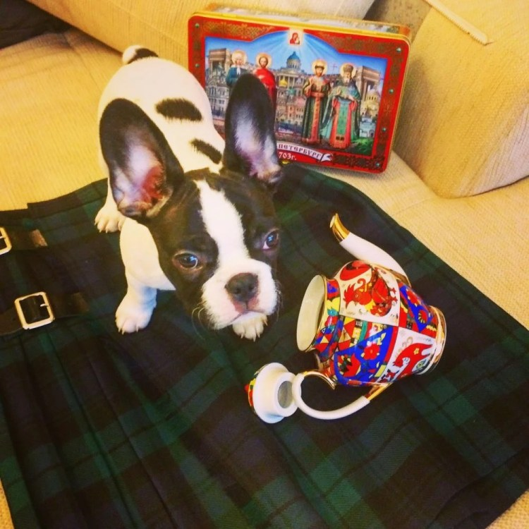 Leonidas on Julian's kilt