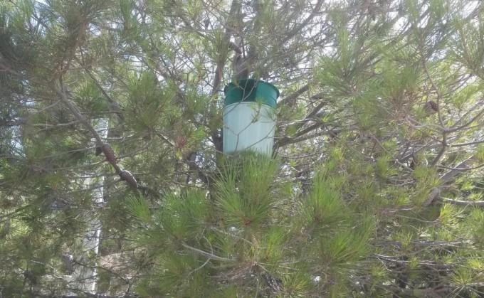 Trampa Kopper de feromonas instalada en Motril