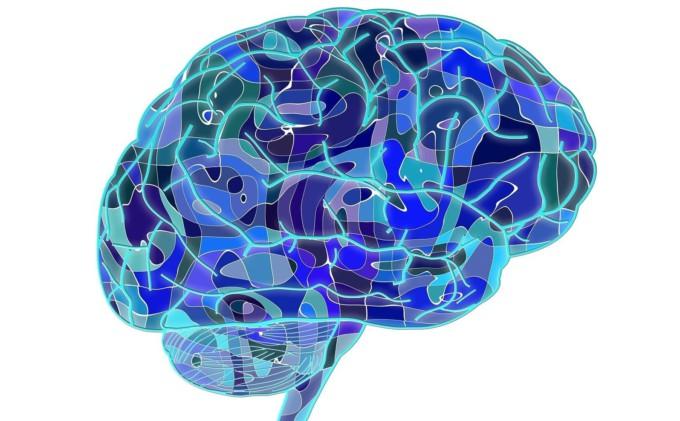 cerebro-toc