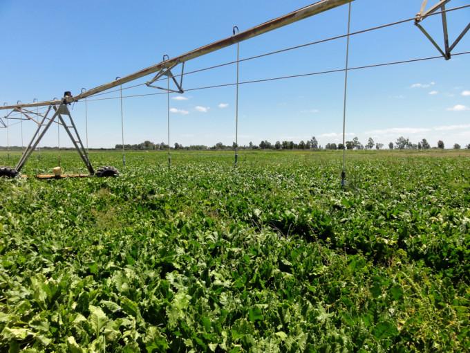 Riego-rural-agricultura