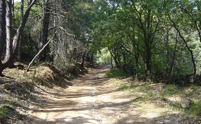 Caminos-forestales1