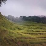arrozal en Nepal Sundhari Danda