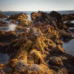 ponta da ferraria algas