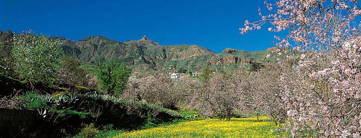 Cmo llegar  Web Oficial de Turismo de Gran Canaria