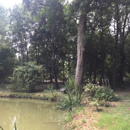 bords de l'étang