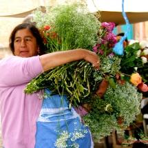 cuenca_fleurs