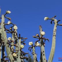 musee_intinan_cactus