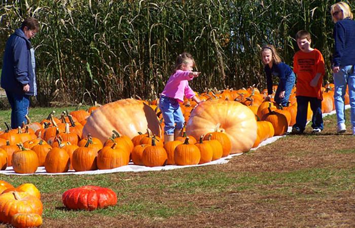 Fall Pumpkin Patch Wallpaper Grandad S Apples N Such Apples Pumpkins Corn Maze