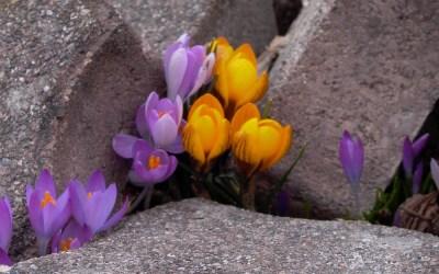 Retraite d'introduction à la prière contemplative
