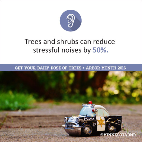 Trees and shrubs can reduce stressful noises by 50%